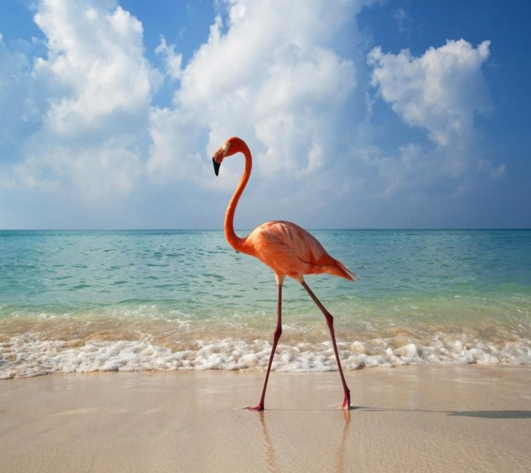 flamingo-bird-beach-854x960